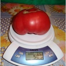 Каталог сортов томатов  2018-2019 года