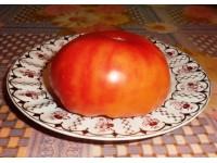 Каталог сортов томатов 2013-2014 года