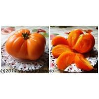 Гигант оранжевый Дмитриева