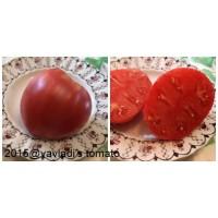 German Red Strawberry