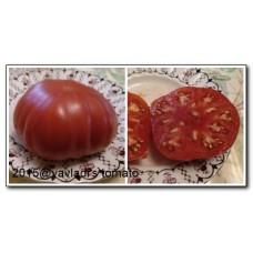 томат 1884