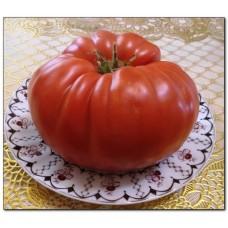 Каталог сортов томатов 2016-2017 года