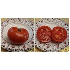 томат Антоновка