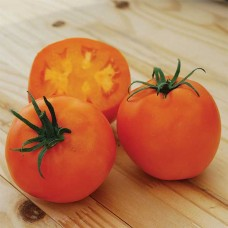 Каталог сортов томатов 2019-2020 годов