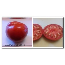 томат Красный крупный Зольский (Krasnyi-krupnyi-zolskiy)