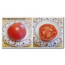 томат Розовый крупный Зольский (rozovyi-krupnyi-zolskyi)