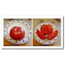 томат Сакмарские розовые крупные (sakmarskie-rozovye)