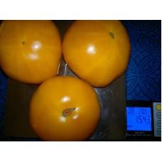 томат Сызранская роза желтая