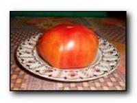 100 сортов томатов для американского сада