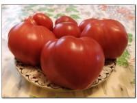 Каталог сортов томатов 2015-2016 года