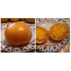 томат Гигант оранжевый (Giant orange)