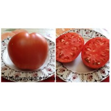 томат Бычье сердце Минусинское 1