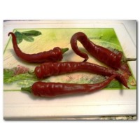 Cayenne Red Longo