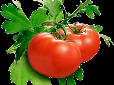 предлагаем семена томатов - магазин семян